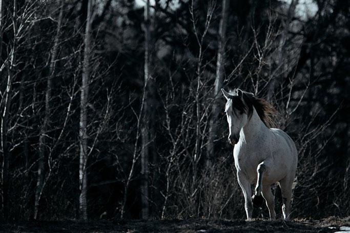 minnesota-horse-equine-photographer-alyssa-smolen-photography24.jpg
