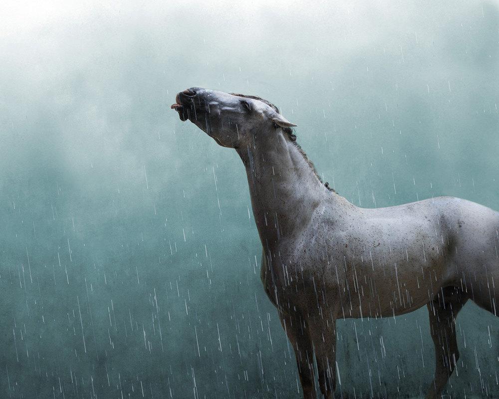alyssa-smolen-photography-minnesota-horse-equine-photography.jpg