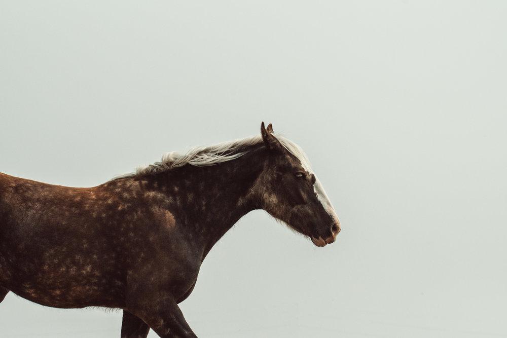 colorado horse equine photographer 3.jpg