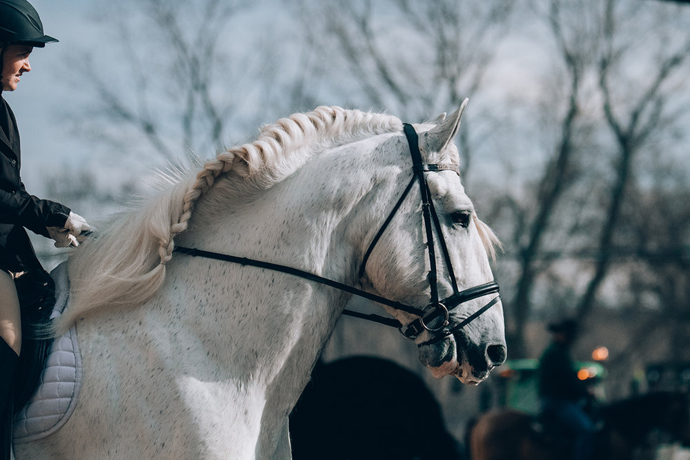 jenson shires nebraska minnesota horse expo alyssa smolen photography.jpg