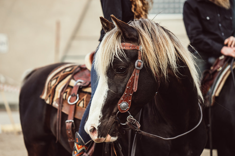 rsquared ranch minnesota horse expo rocky mountain horse alyssa smolen photography.jpg