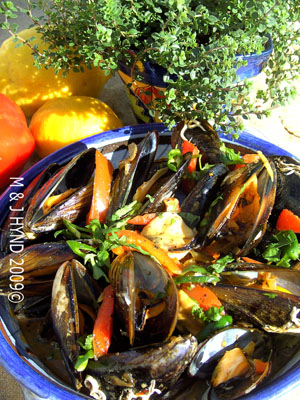 MUSSELS WITH SAMBAL & HARISSA - Cookbook: Travels with a One-Handed Cook; Jacqui Hynd