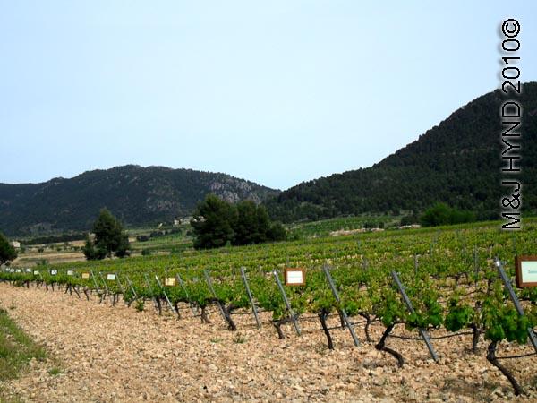 spain Jumilla, Murcia, wine route Casa de la Ermita Bodegas wine tour ripening grapevines, hilly terrain