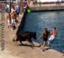 spain Costa Blanca javea bulls chase heroes at the port marina