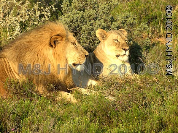 """Boris and Doris': Sharwari Game Reserve, SA"
