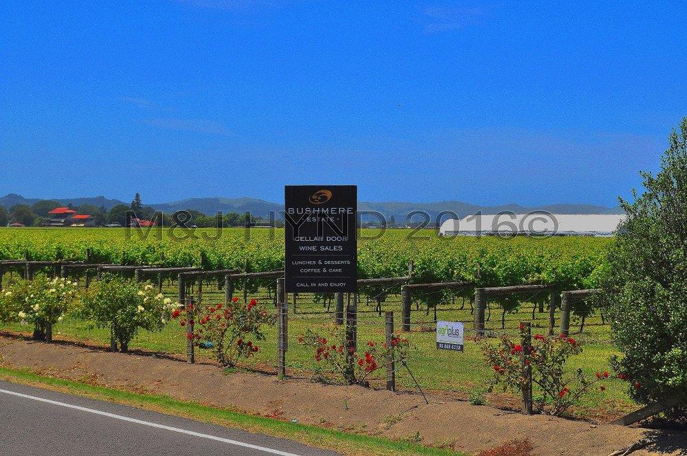 Bushmere Estate vineyards, Gisborne Farmers Market, NZ