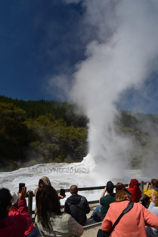 Lady Knox Geyser erupting, Wai-o-tapu Thermal Wonderland, Rotorua, NZ
