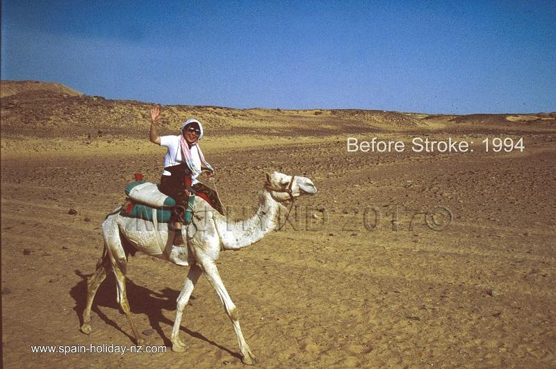 steering a ship of the desert, aswan, egypt