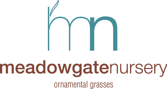 Meadowgate Nursery – Ornamental Grasses
