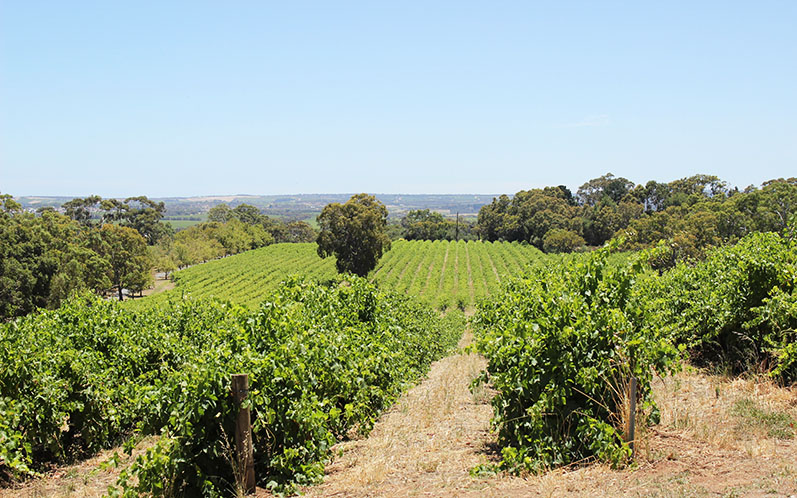 Weekend in Mclaren Vale // Miss Sweet Nothings