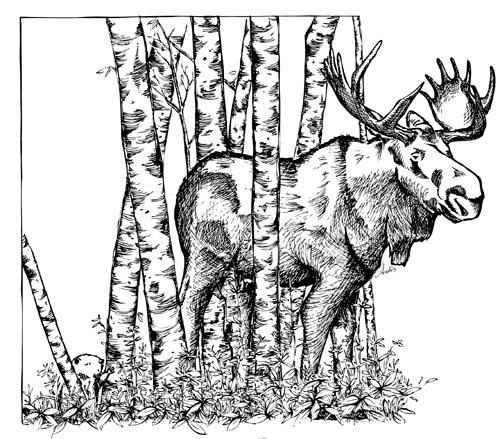 full moose.jpg