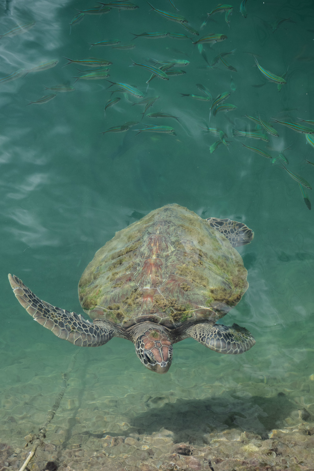 This little guy said hi while we were going around the SEAFDEC Marine Station.