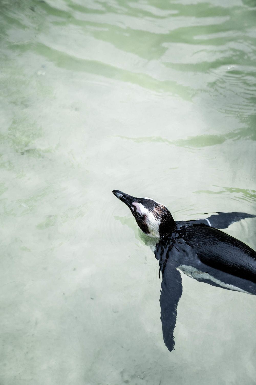 Animal Adventures with Wildlife Reserves Singapore — Jelito de Leon