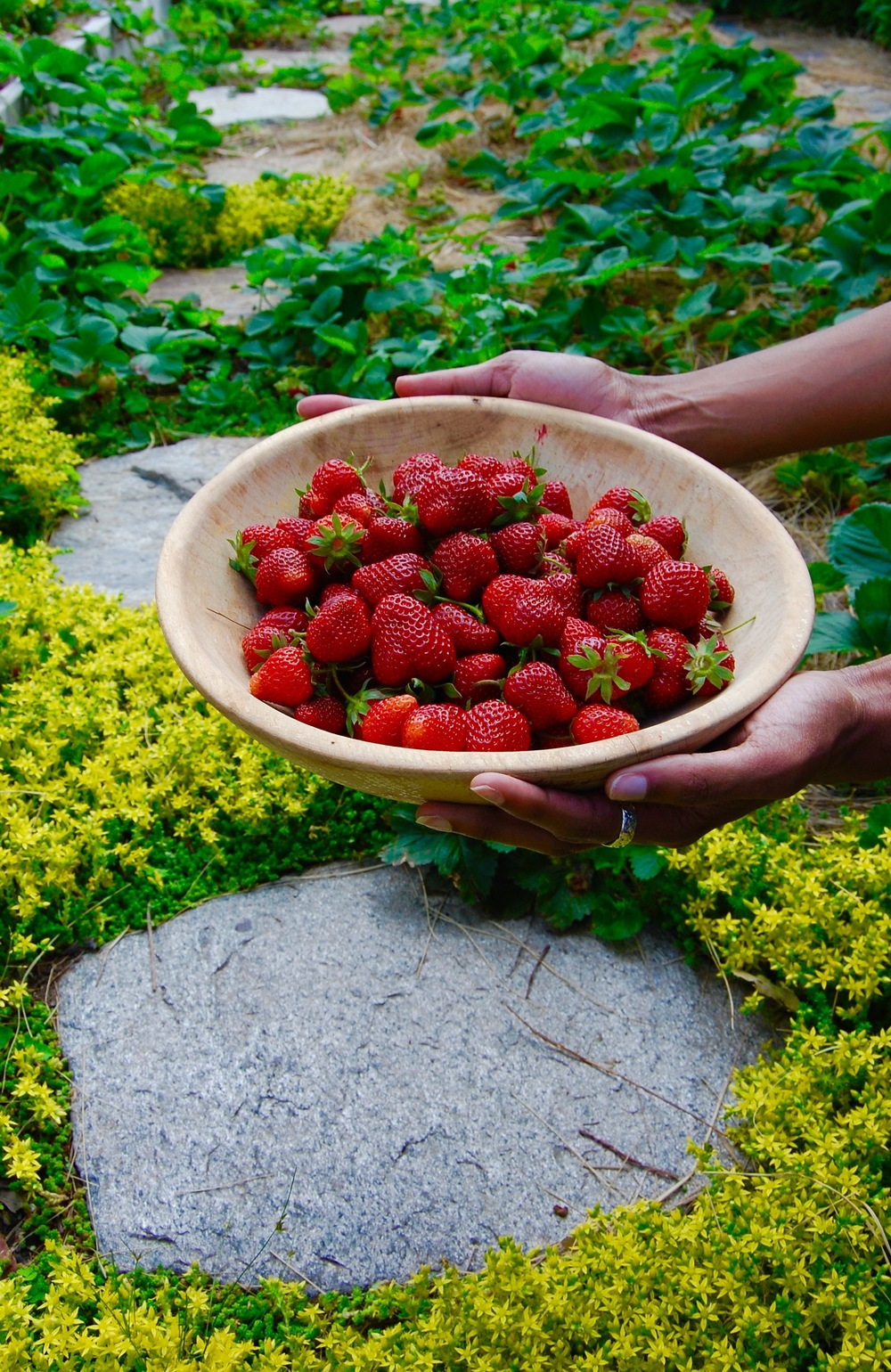 Stepping Stones and Strawberries