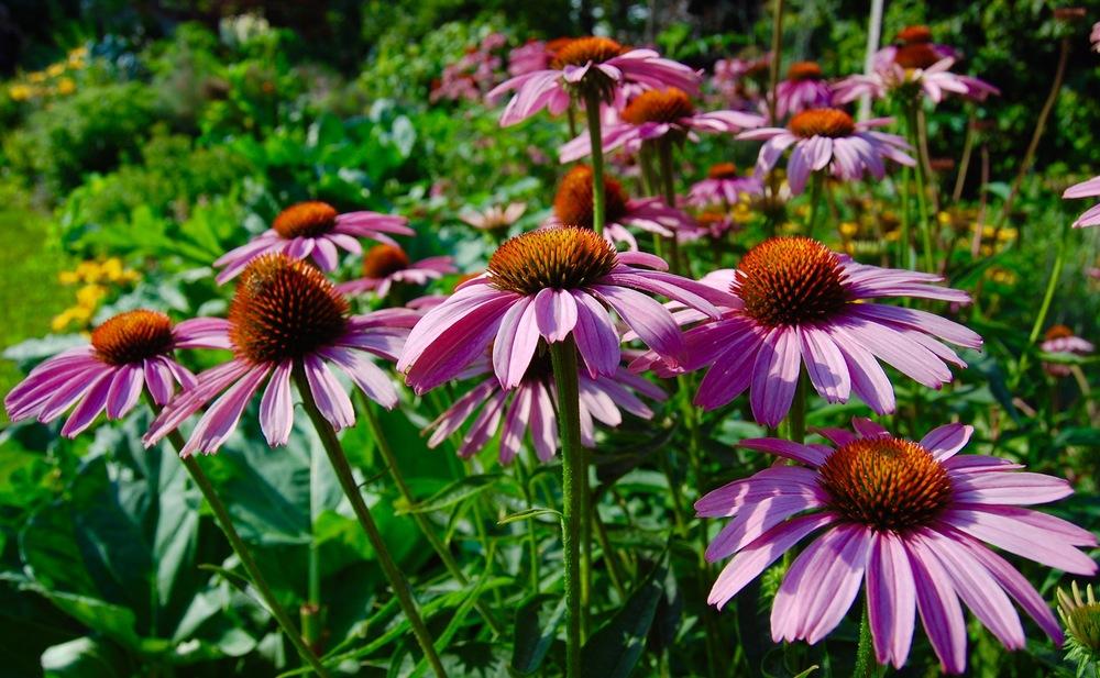 Edible & Flower Garden