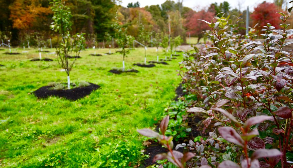 SCOPE OF WORK:   - Orchard design and installation  - Large deer fence design and installation