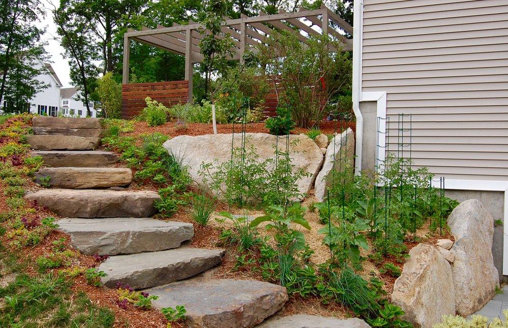 Cedar and Ipe Grape arbor, edible landscape, natural stone work.jpg