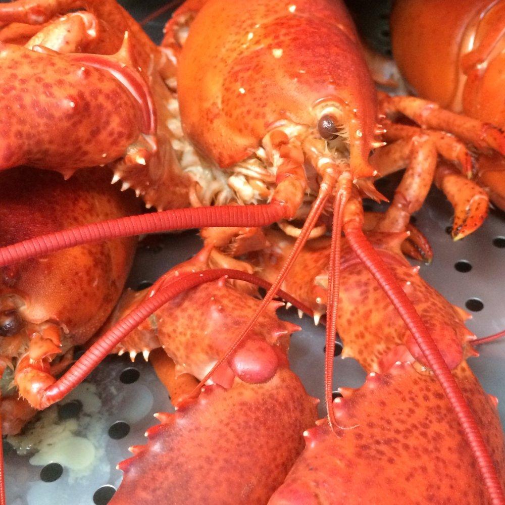 Gus&Co.Maine Lobster.JPG