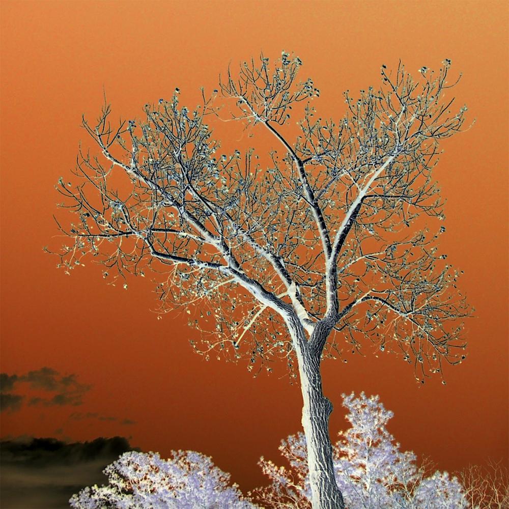5_Rmalloy_springtreesinorange.jpg