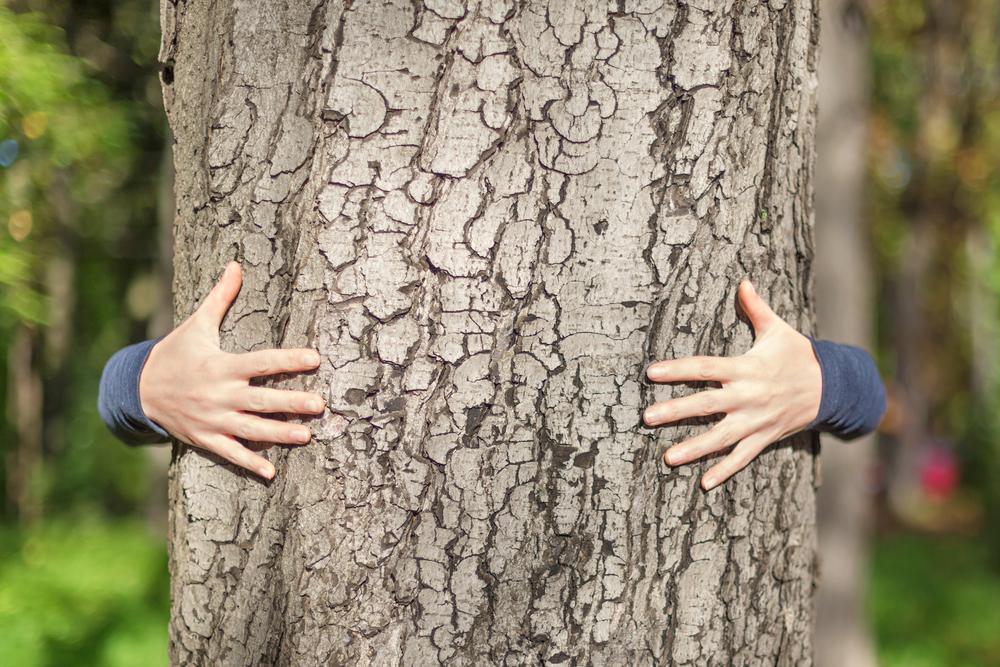 shutterstock_155384801_embracing_tree.jpg