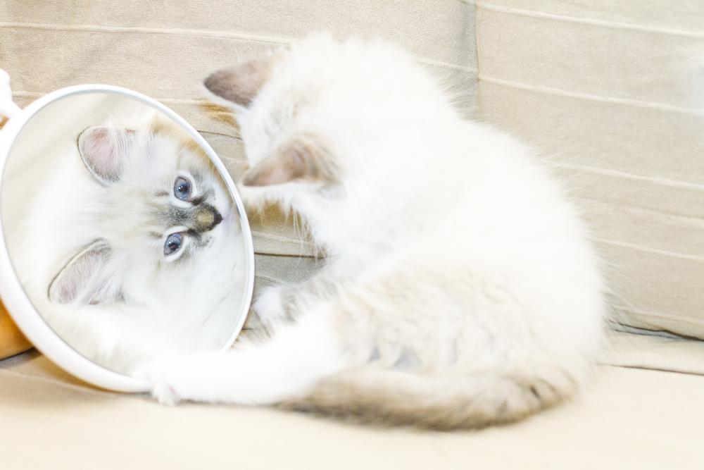 mirror_cat_shutterstock_261775046.jpg