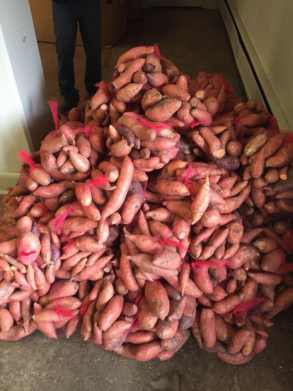 Sweet Potato Drop 2018-0441.JPG
