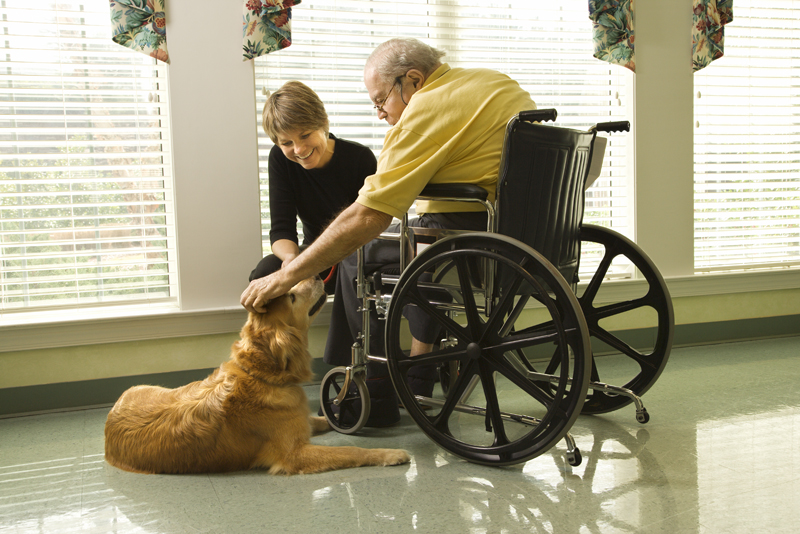 This program aims to support aged care residents who have pets.  Use of funding can include but is not limited to: - Modifications to facilities which enable and support live-in arrangements - Purchase and installation of equipment to enable and support live-in arrangements - Fees - Visitation and transport costs - Veterinarian bills to ensure vaccinations and health treatments - Assistance to care for pets: walking, grooming, bathing, feeding.  Grants are up to $1,000, with applications closing 11 September.   Read more details and apply now .