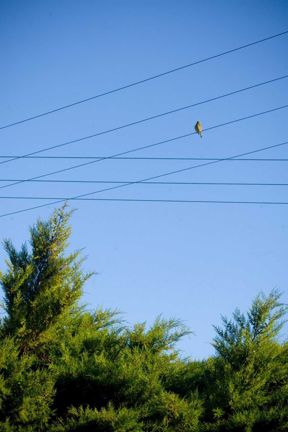 Bird on a Wire, New Zealand