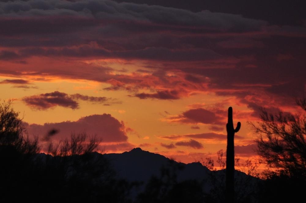 arizona sunset saguaro