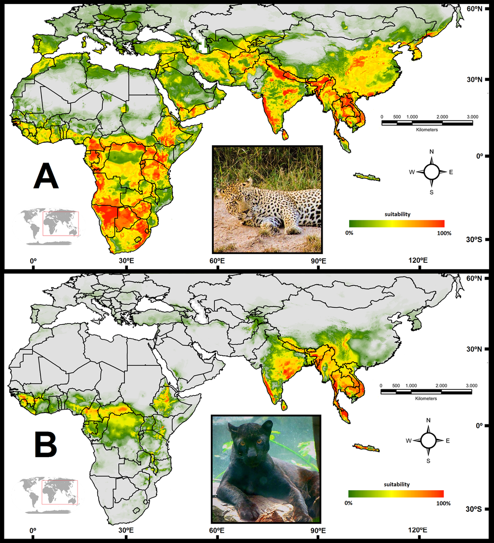 Our Study Mapping Black Panthers In Published Claws