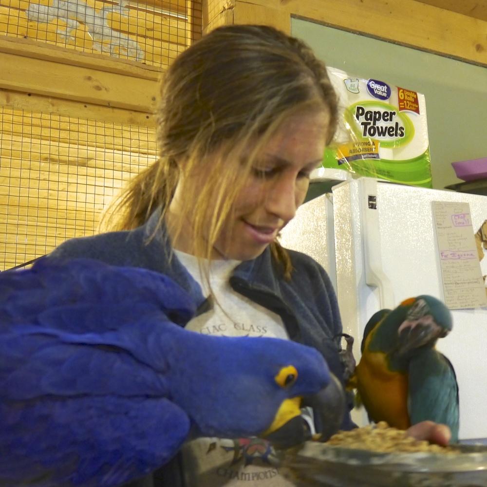 Foster Parrots - Liz, Burt, Jub-Jub.jpg