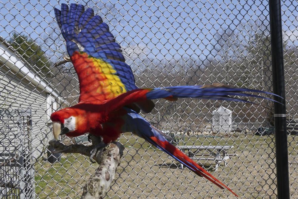 Foster Parrots - Mary.jpg