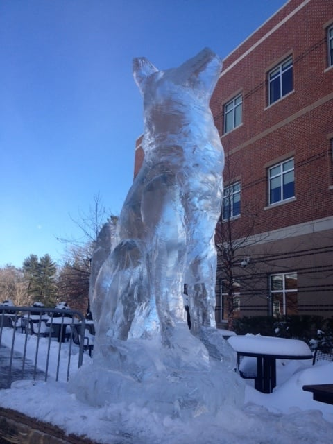 wolf ice sculpture.jpeg