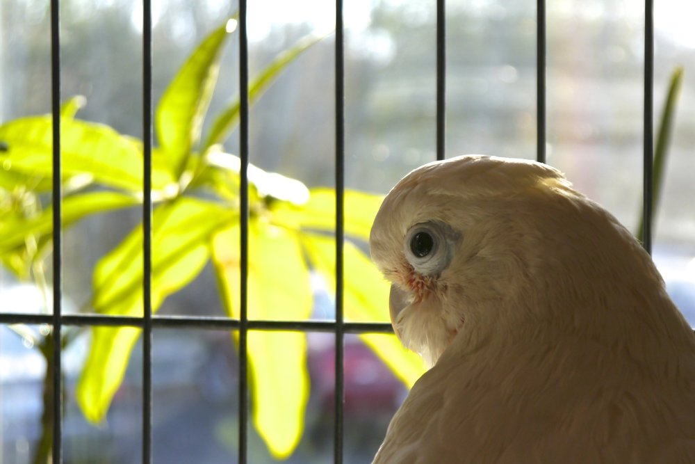 Foster Parrots - Digit (2).jpg