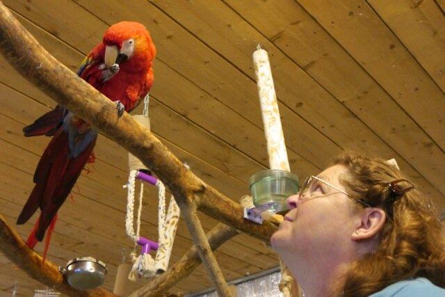 Foster Parrots - Inca and Linda.jpg
