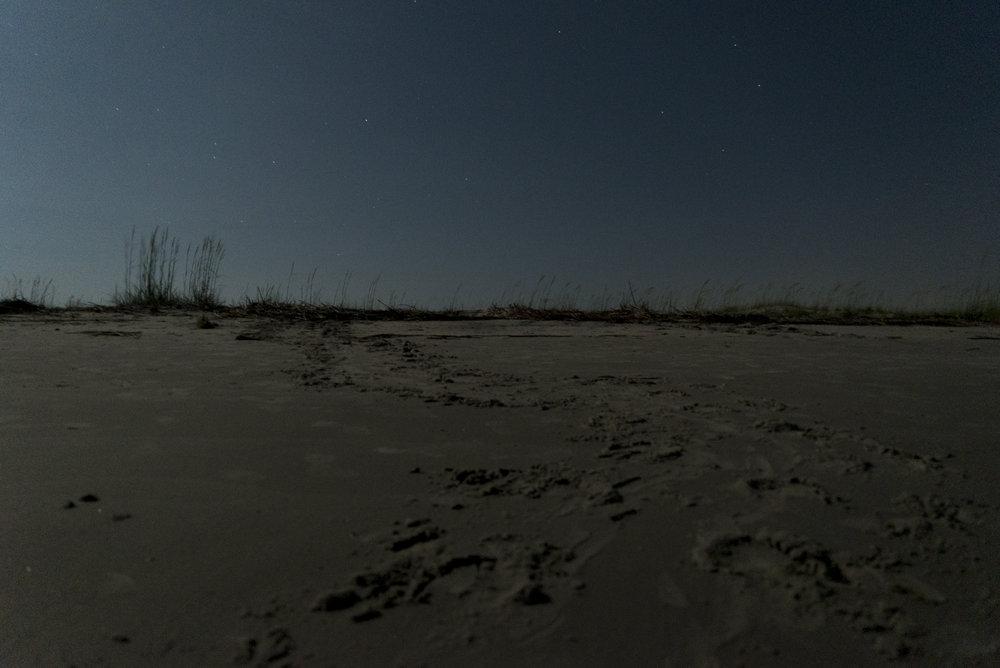 Loggerhead Sea Turtle tracks