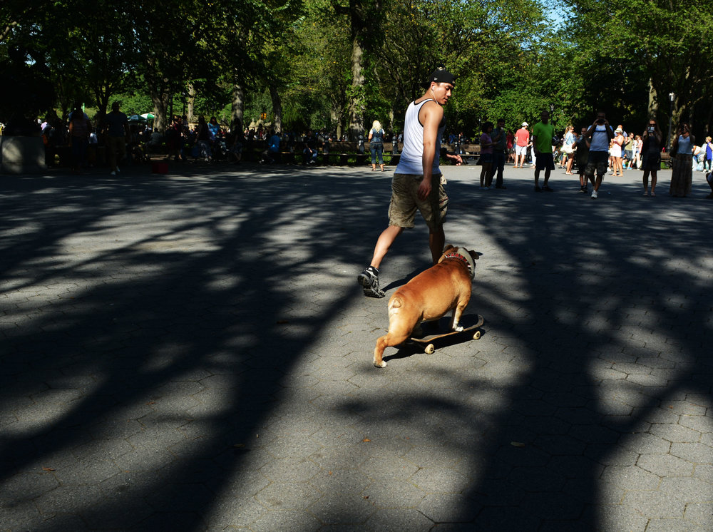 dog on skateboard.jpg