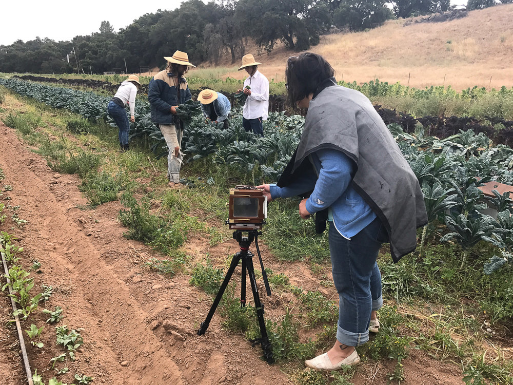Photographing on a farm in Ojai, CA