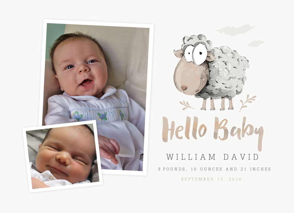 BABY SHEEP ANNOUNCEMENT - ONE-SIDED
