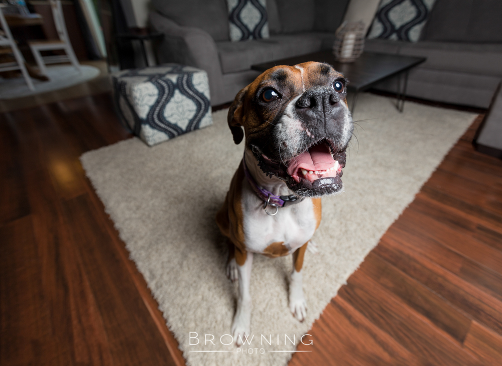 casey-the-boxer-2