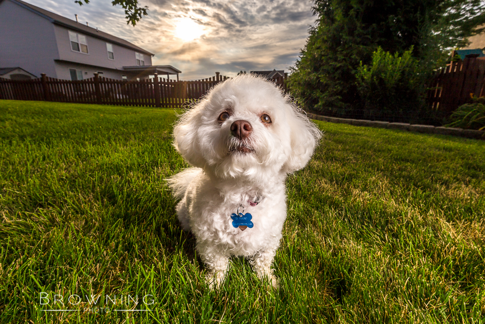 columbus-dog-photography