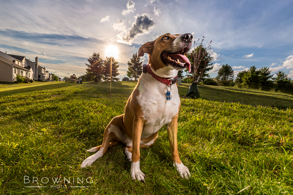 columbus-dog-photography