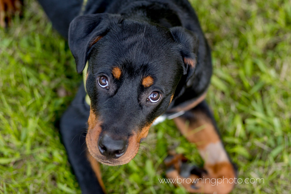 columbus-dog-photography-3