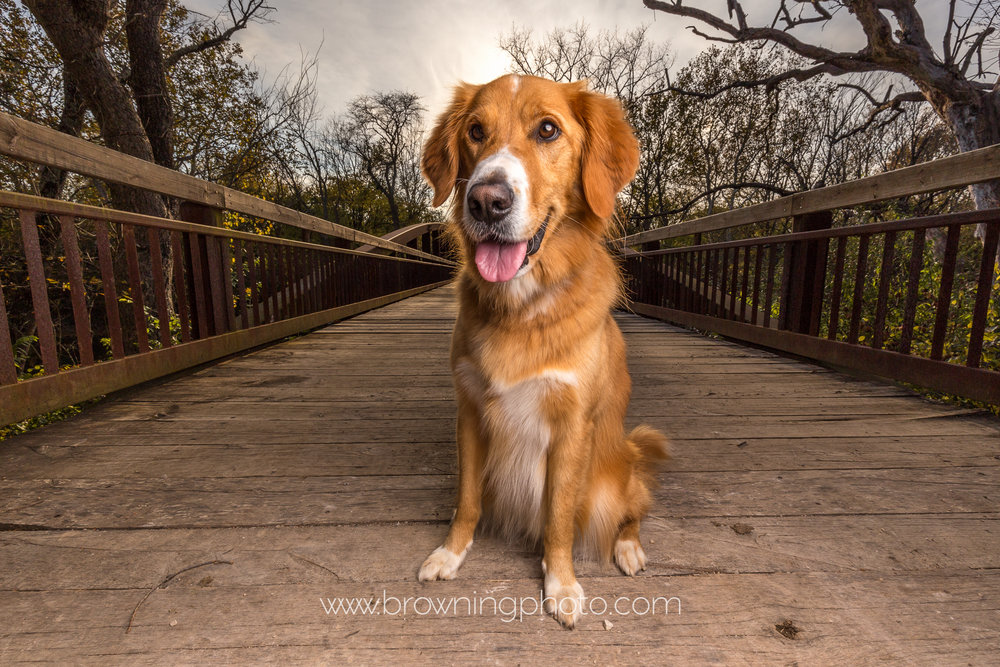 hilliard-dog-photography-3