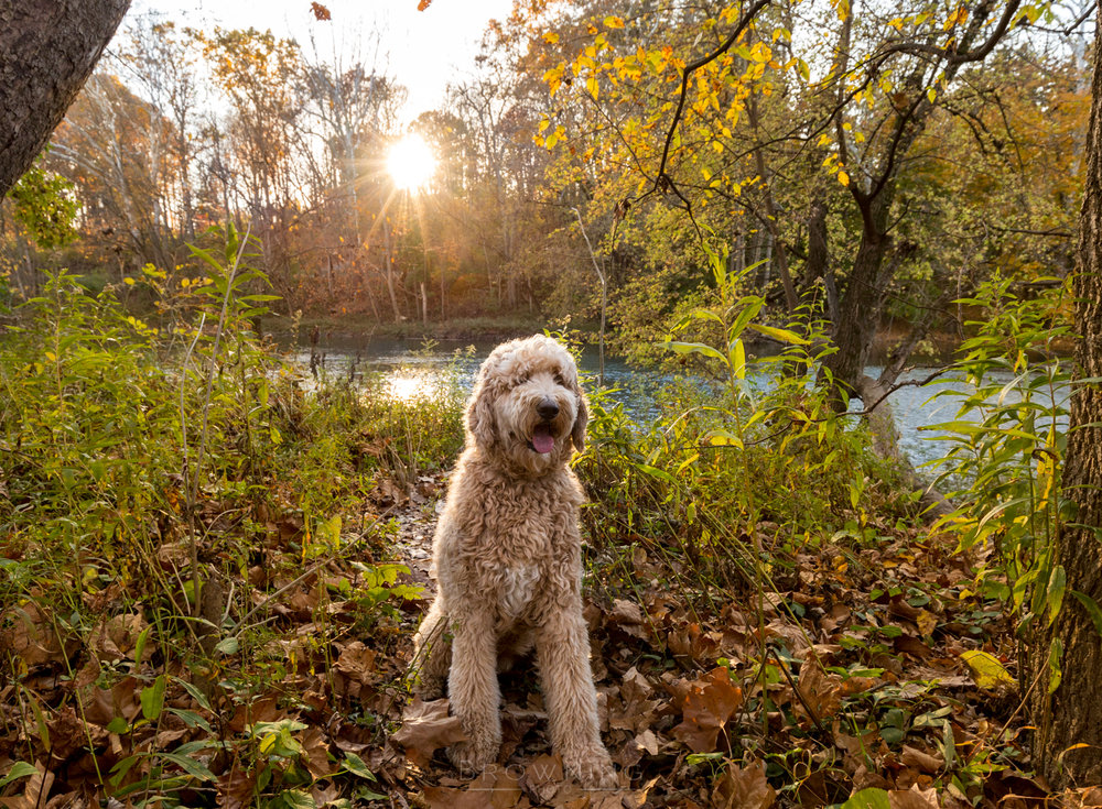 columbus dog photography