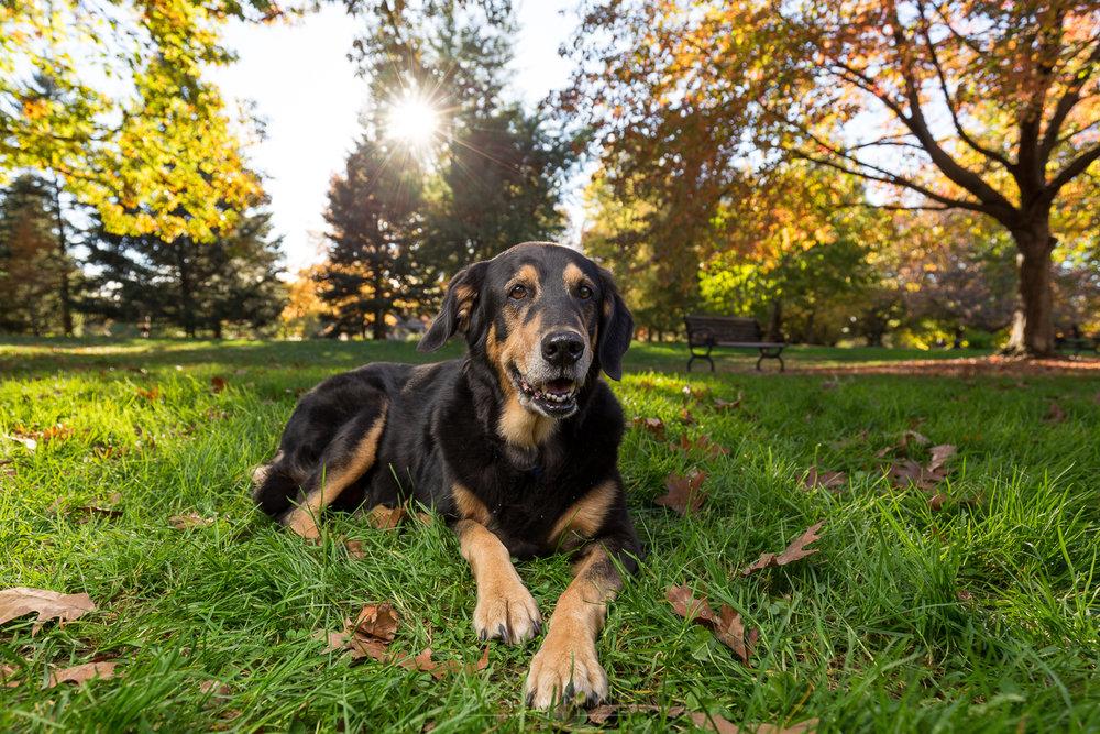 goodale-dog-2