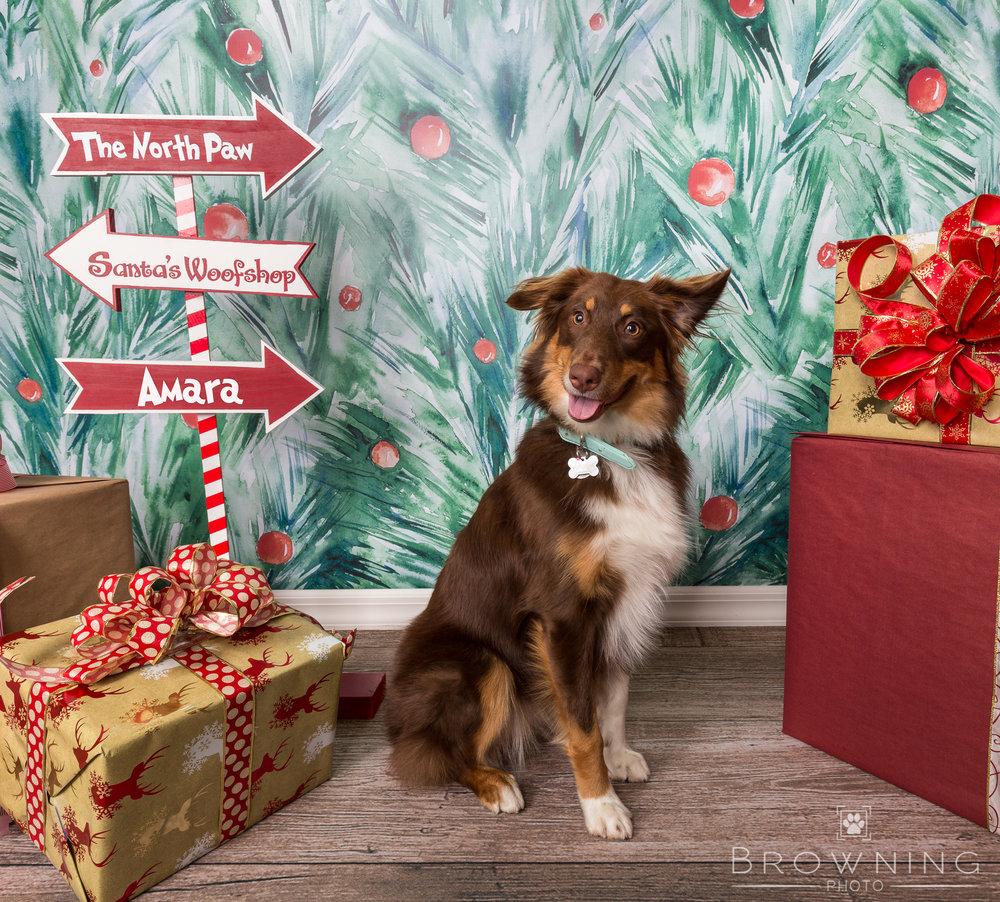 columbus dog photography