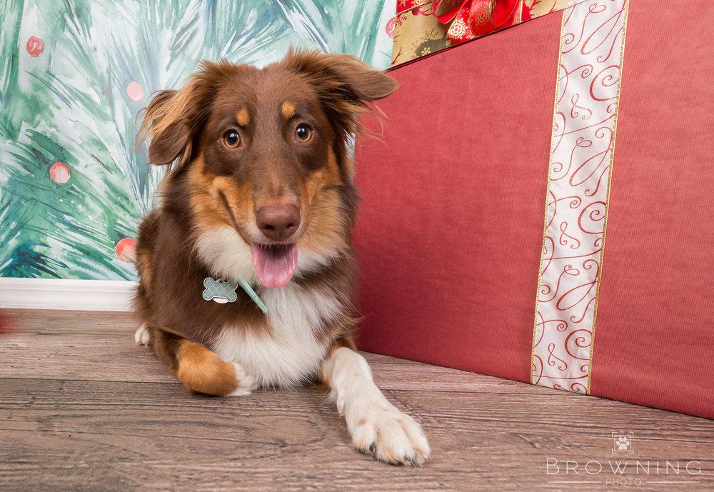 Pet-People-Christmas-portraits
