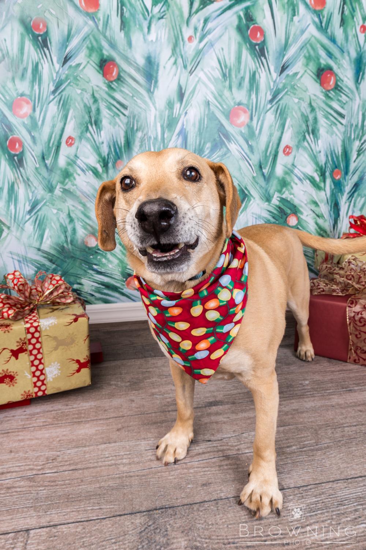 Christmas dogs-4