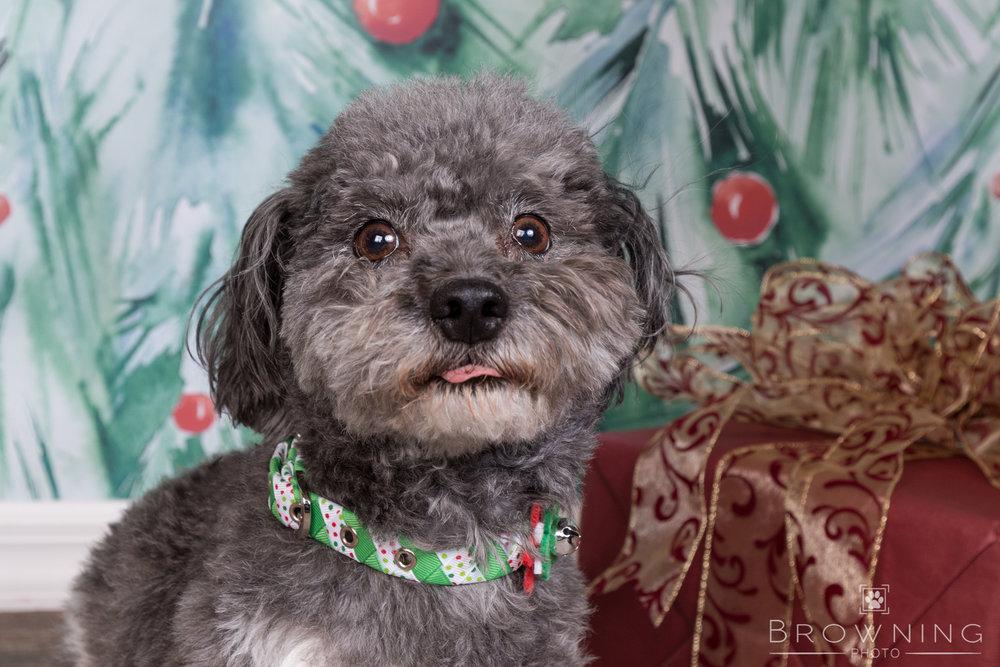 dog-days-of-christmas-1